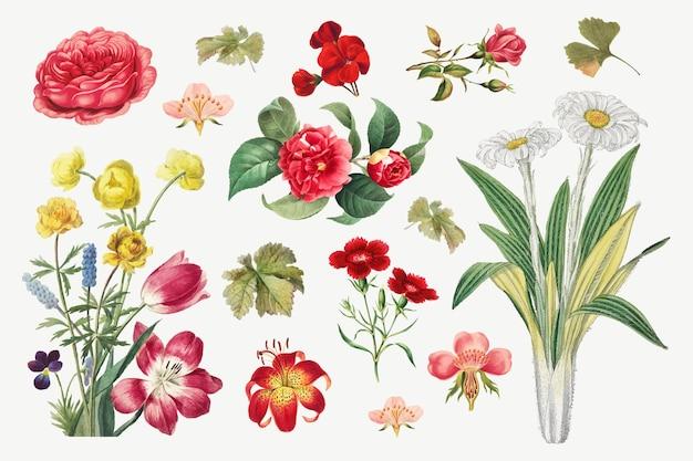 ヴィンテージ花植物画ベクトルセット