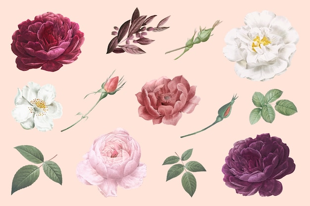 Vintage flower drawings