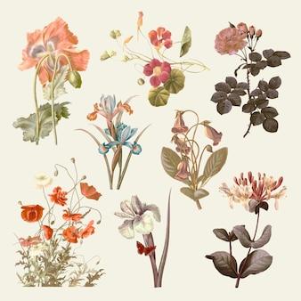 パブリックドメインのアートワークからリミックスされたヴィンテージの花のイラストセット