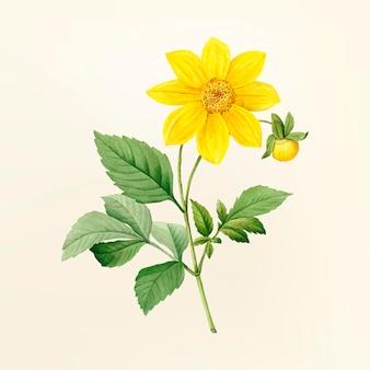 ヴィンテージ花のイラスト