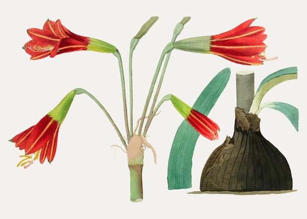 ビンテージ花のイラスト