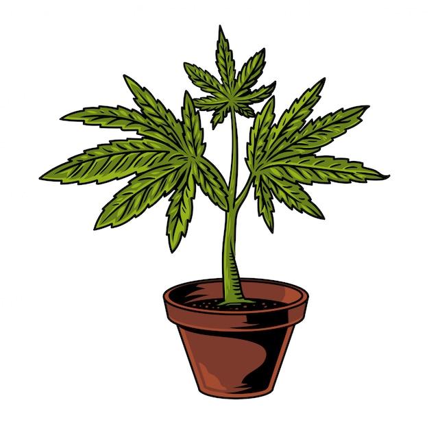 大麻葉マリファナの雑草緑麻の植物とビンテージフラワーポットは、煙の医療食品抽出物。