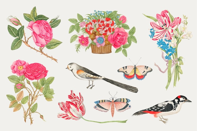 Vintage flowers and birds  illustration set, remixed from the 18th-century artworks from the smithsonian archive.