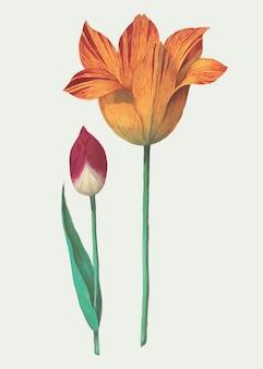 Vintage flowers illustration