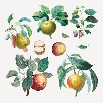 アンリ=ルイ・デュアメル・デュ・モンソーのアートワークからリミックスされたヴィンテージフルーツベクターアートプリントセット