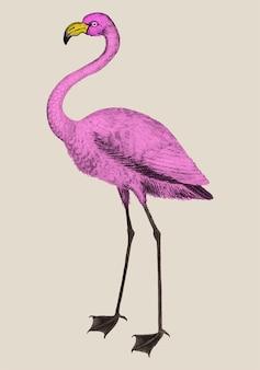 Vintage full length pink flamingo illustration vector
