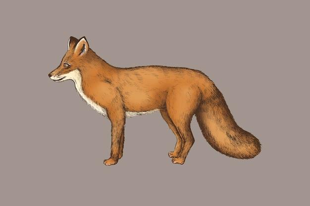 Vintage furry brown fox