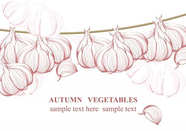 Vintage garlic background vector