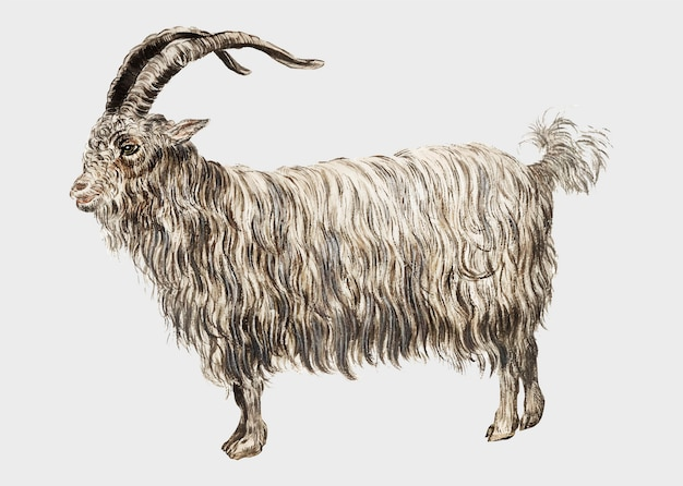 Vintage goat illustration in vector