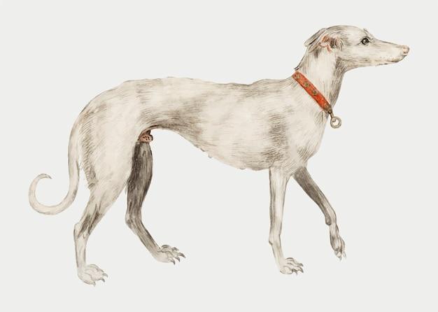 Vintage greyhound illustration in vector