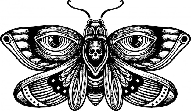 Vintage hand drawn skull moth drawing illustration