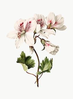 Vintage illustration of branch of azaleas in bloom