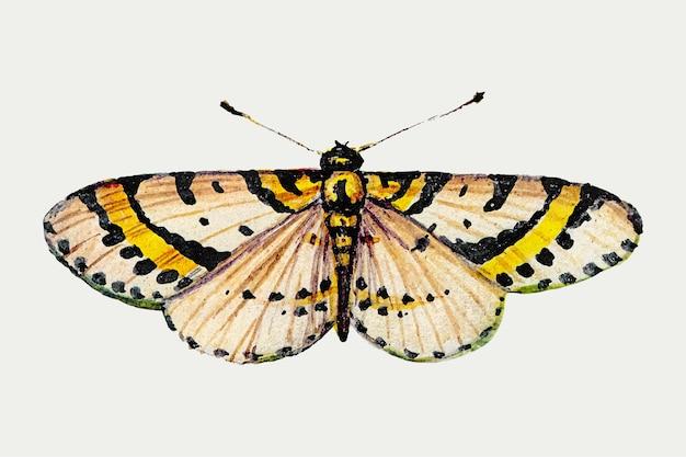 노란 나비의 빈티지 일러스트