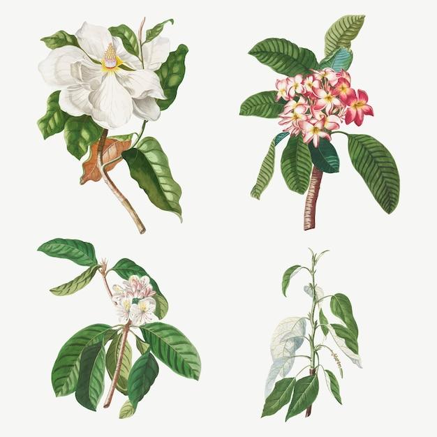 Set di illustrazioni vintage di magnolia, plumeria, fiore di guava e pioppo balsamico
