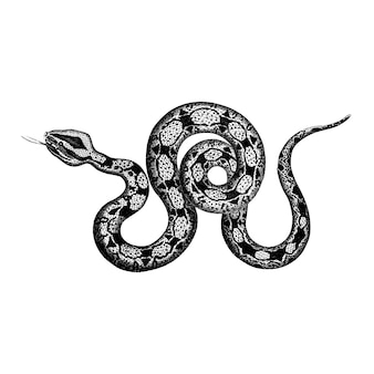 Vintage illustrations of constrictor boa