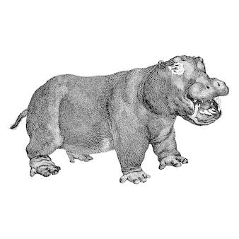 Vintage illustrations of hippopotamus