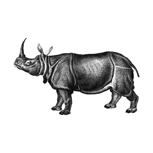 Vintage illustrations of indian rhinoceros