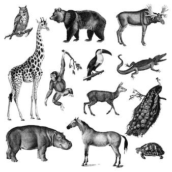 動物のビンテージイラスト