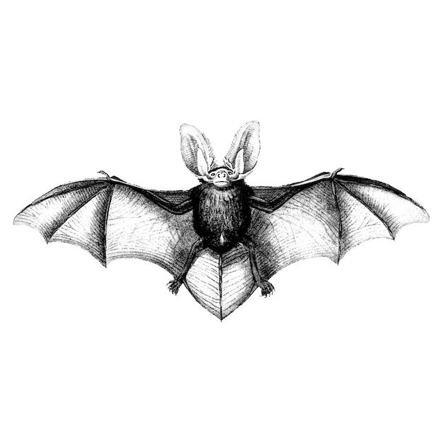 박쥐의 빈티지 일러스트