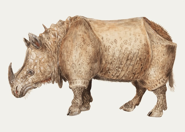 빈티지 인도 코뿔소 그림 벡터