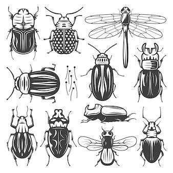 Коллекция старинных насекомых с летающей стрекозой и различными типами жуков и жуков изолированы