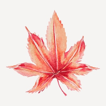 Vintage japanese maple leaf vector art print, remix from artworks by megata morikaga