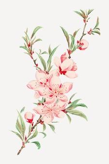 ヴィンテージ日本の桃の花のベクターアートプリント、megatamorikagaのアートワークからのリミックス