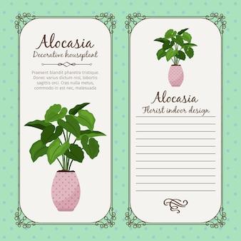 Vintage label with alocasia plant