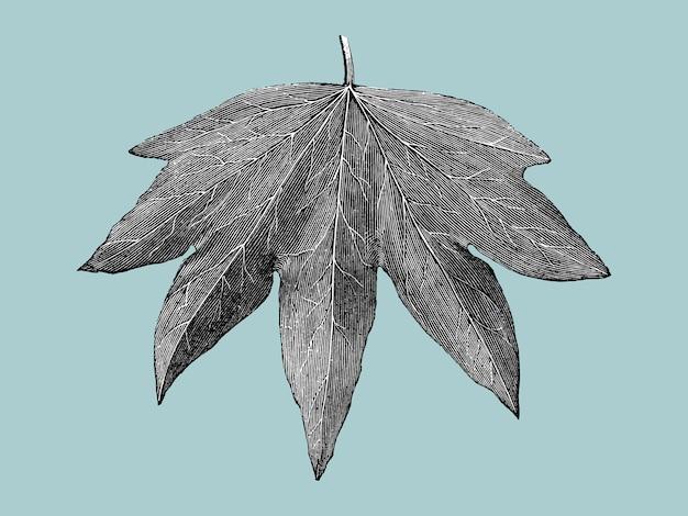 Иллюстрация старинных листьев