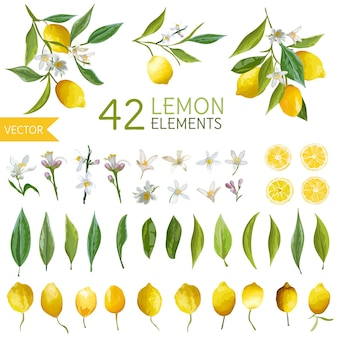 Vintage lemons, flowers and leaves bouquetes