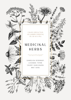 Vintage medicinal herbs card or invitation . hand drawn flowers, weeds and meadows illustrations. summer plants template. botanical background with floral elements in engraved style.