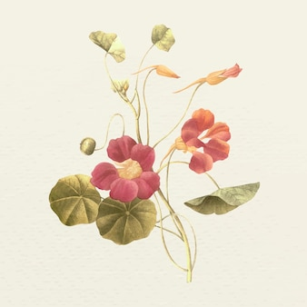 Vintage monk's cress flower vector illustration, remixed from public domain artworks