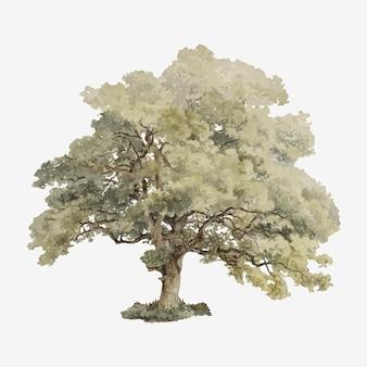 Vintage oak tree illustration
