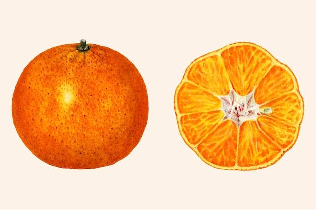 ヴィンテージオレンジのイラスト。