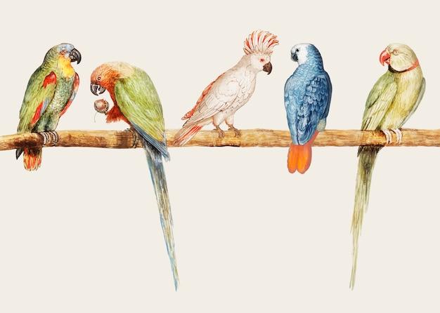 Разнообразие старинных попугаев на векторной иллюстрации ветви