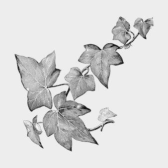 Illustrazione di foglie e piante d'epoca