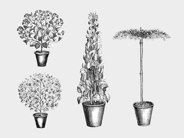 Vintage plants and leaves illustration