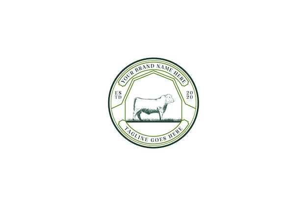 Vintage retro angus cattle for beef logo design vector