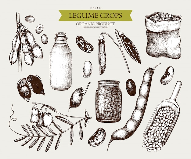 Vintage set of legume plants and farm products in vintage style