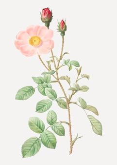 ビンテージの輝くバラのポスター