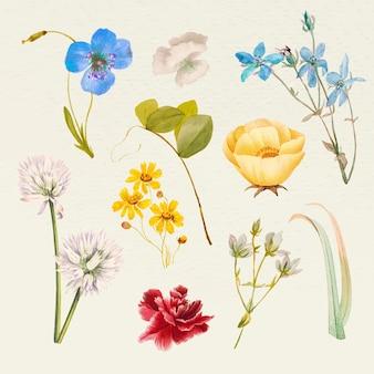 Set di illustrazioni con nomi di fiori estivi vintage, remixate da opere d'arte di pubblico dominio