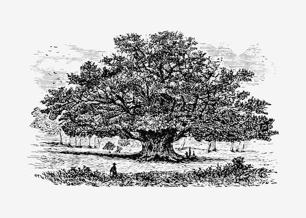 Старинная иллюстрация дерева