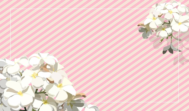 Vintage tropical frangipani flower on strip pastel pink background