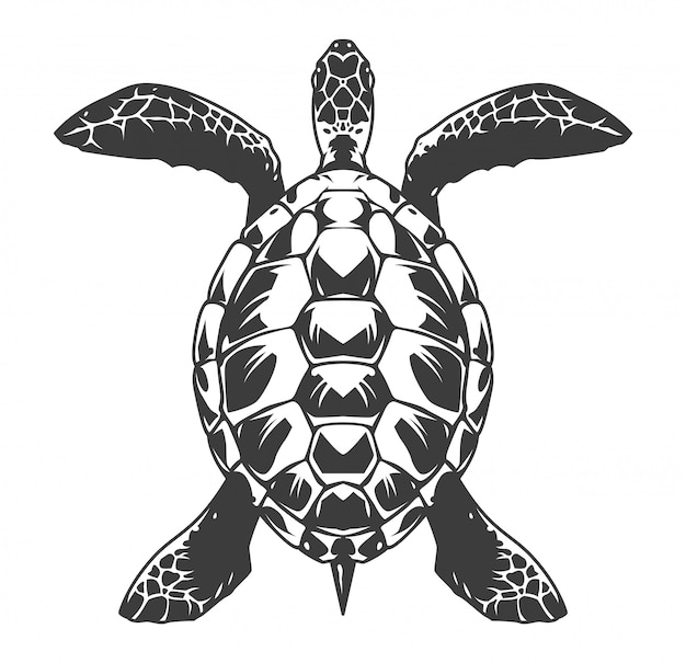 Vintage turtle top view illustration