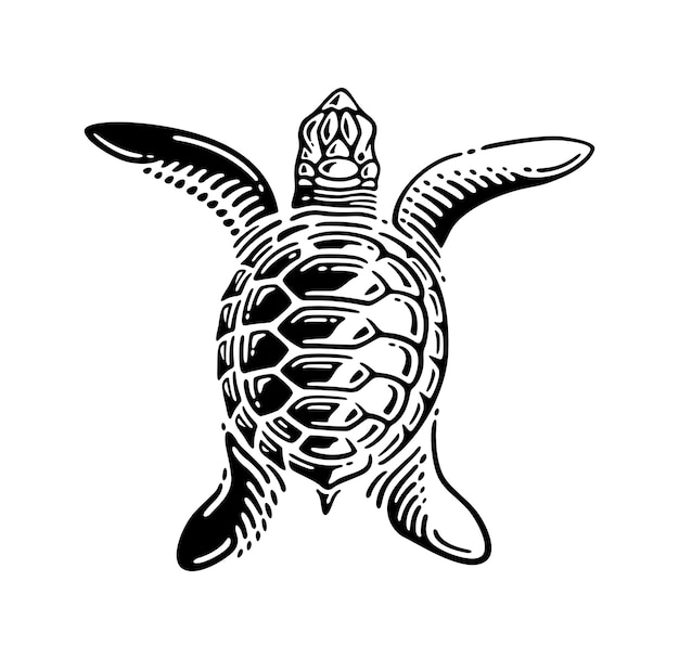 Vintage turtle top view illustration