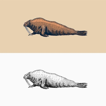 Vintage walrus marine creatures nautical animal fur seal or pinnipeds retro signs doodle style hand