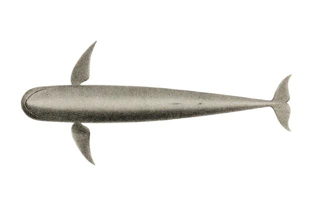 ビンテージクジラのイラスト