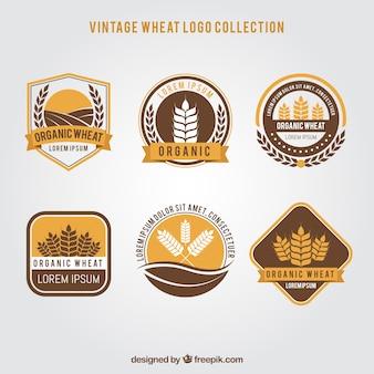 ビンテージ小麦ロゴコレクション