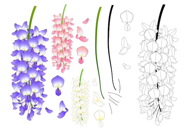 Violet blue pink and white wisteria outline