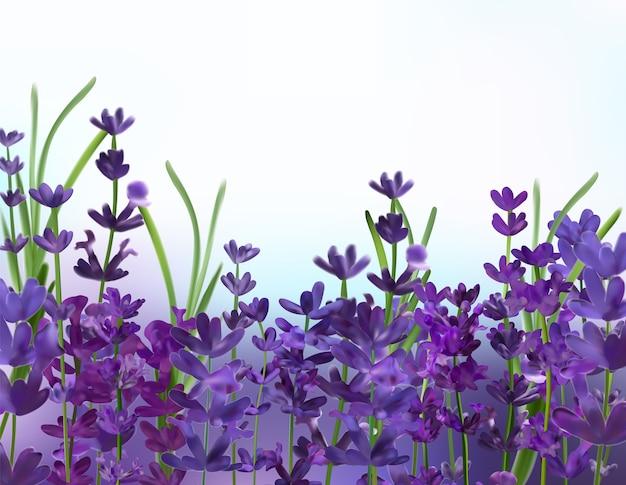 紫のラベンダーの背景。 3dリアルなアロマティックラベンダー。花のラベンダーをクローズアップ。香り高いラベンダー。ベクトルイラスト。